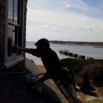 Window cleaning in Marion
